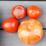 big-boy-tomatoes