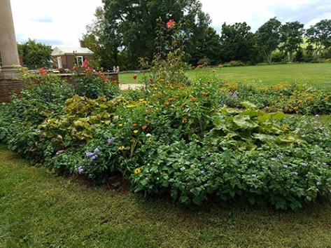 Flower garden patch