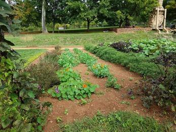 veg-garden-2
