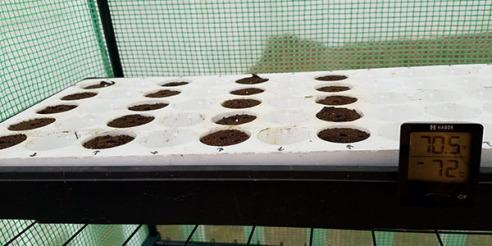 seed-tray-1