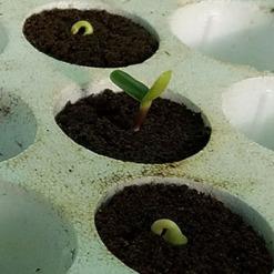 seed-tray-2